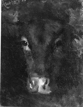 Rinderkopf