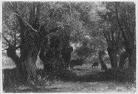 Landschaft unter Bäumen mit weidendem Vieh