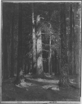 Sonnenschein im Walde