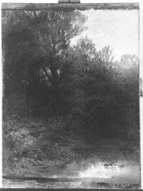 Bäume und Gesträuch an einem Altwasser