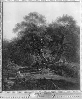 Wald bei Wallgau