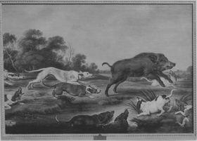Wildschweinhetze