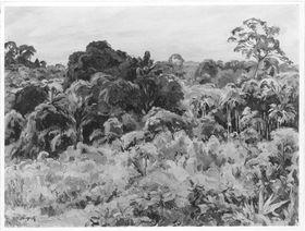 Blick über den Urwald (Sumatra)