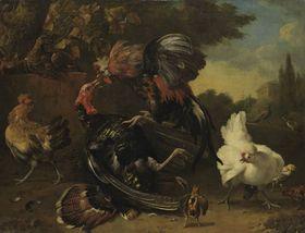 Kampf zwischen Hahn und Truthahn