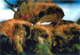 Pilze/Funghi 21