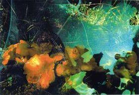 Pilze/Funghi 06