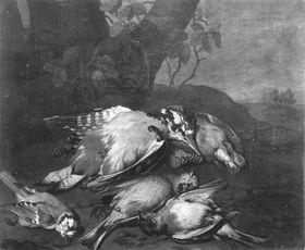 Vogeljagdbeute
