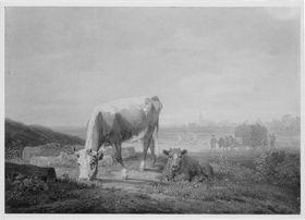 Weidende Kuh und liegendes Kalb
