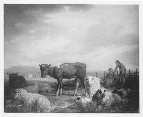 Kalb und Schafe auf der Weide