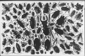 Käfer- und Insektensammlung