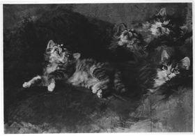 Katze mit Detailstudien