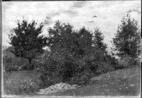 Landschaft (Hügelige Landschaft)