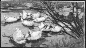Ganz kleine Enten am Teich