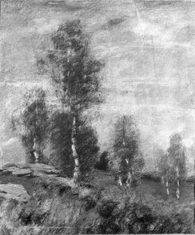 Birken in Haide