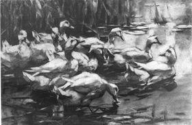 Ins Wasser gehende Enten