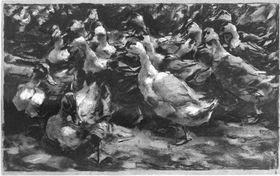 Sich aufgeregt versammelnde Enten
