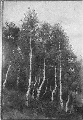 Birkenwald bei Kleinsassen (Rhön)