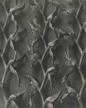 Tritonia crocosmiflora