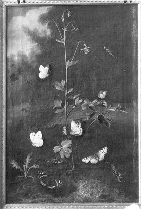 Akelei mit Schmetterlingen