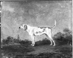 Hundestück