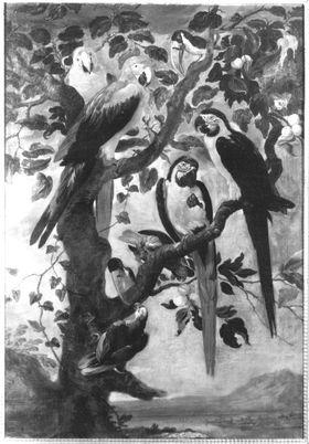 Neun Papageien und Tukane