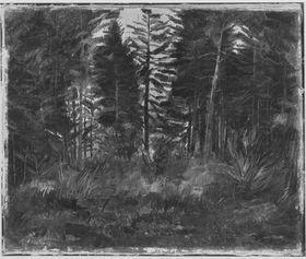 Waldinneres (Föhren)