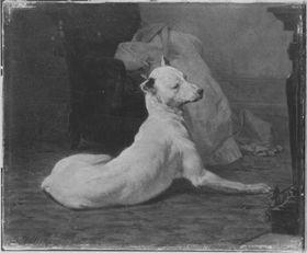 Liegende, weiße Dogge