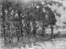 Baumgruppe am Wasser