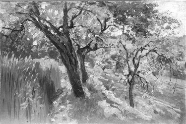 Wiese und Feld mit Obstbäumen