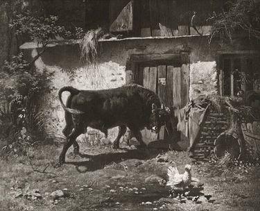Stier vor dem Stall