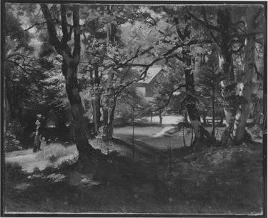Sonniges Waldbild