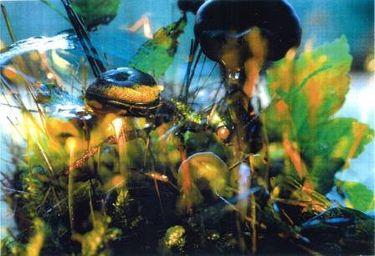 Pilze/Funghi 15