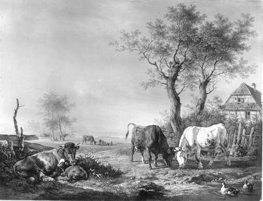 Kämpfende Kühe bei einem Gehöft