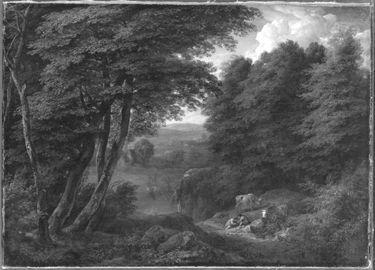 Schattiger Waldgrund