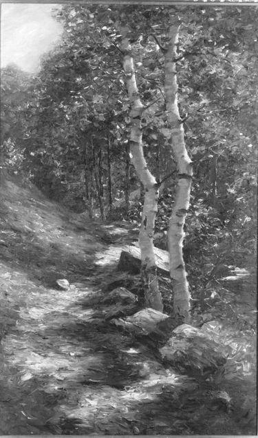 Birken in der Sonne (Waldweg)