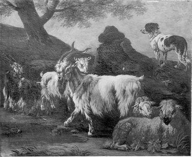 Ziegen und Schafherde