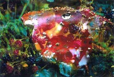 Pilze/Funghi 05