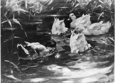 Fünf Enten, zwei davon eintauchend