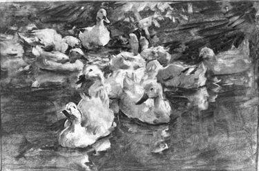 Zehn weiße Enten