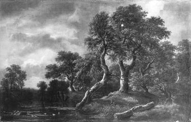 Waldlandschaft mit sumpfigem Gewässer