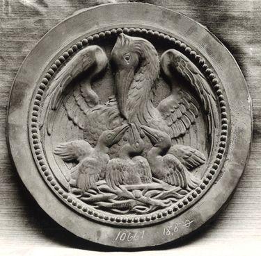 Pelikan mit Jungen