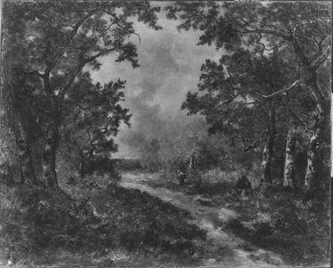 Schneise im Wald von Fontainebleau