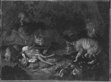 Wildkatzen und totes Rehkitz