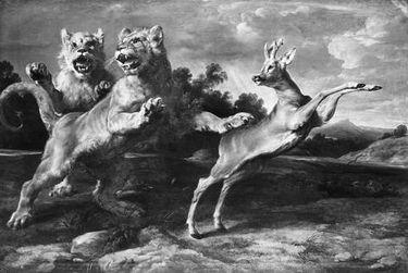 Zwei junge Löwen verfolgen einen Rehbock